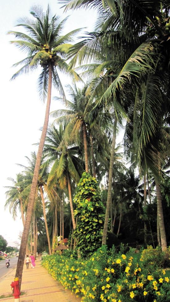 椰子树和鲜花开始为小镇添上休闲的海边风情