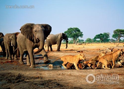 壁纸 大象 动物 500_360