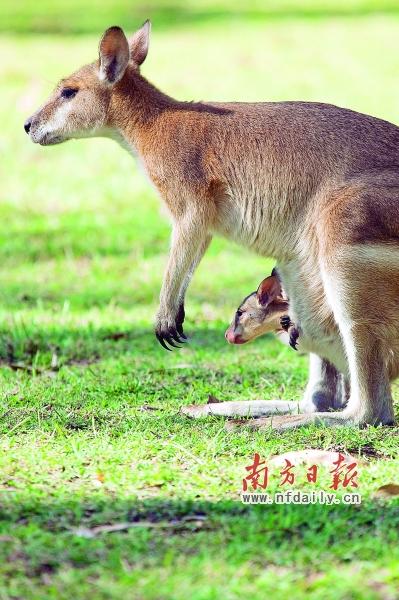 可以看到许多栖息于自然环境中的可爱动物们.