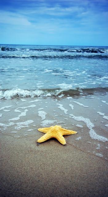 沙滩海星手机壁纸