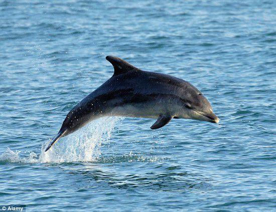 英动物保护协会警告:游客自拍行为威胁海豚生命