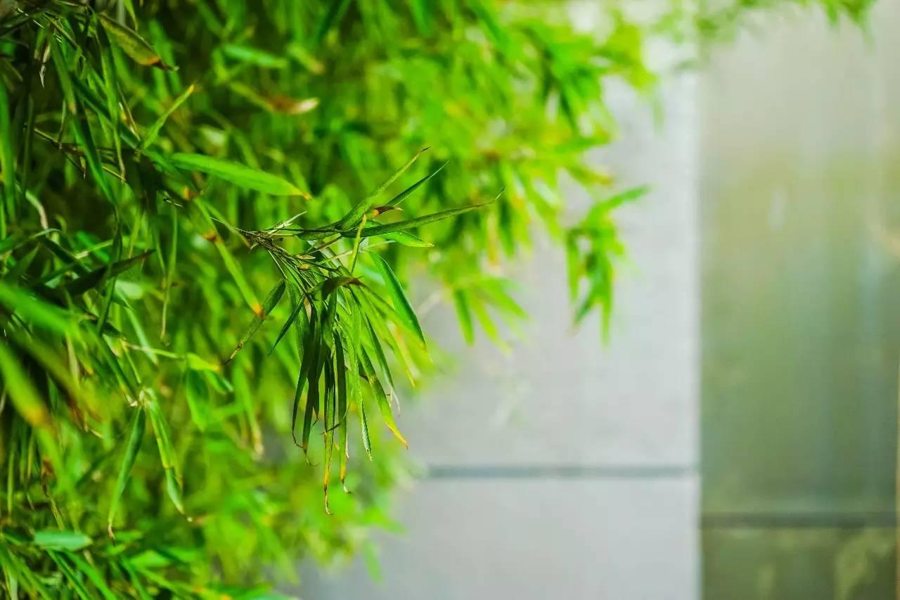 手绘古风风景图片竹林