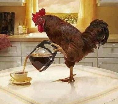 金鸡独立倒咖啡!