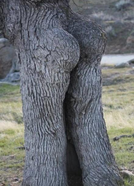 树也玩性感~