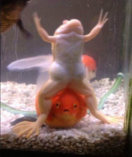 请问你看到一只青蛙了吗?