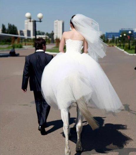 爱上一匹野马,就要娶她回家