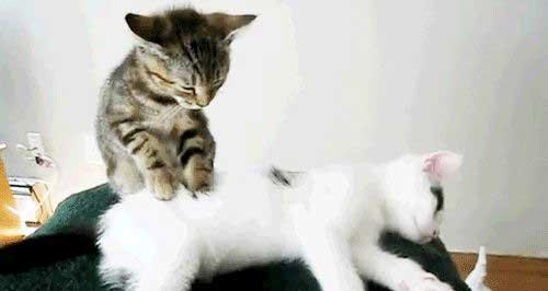 壁纸 动物 猫 猫咪 小猫 桌面 500_266