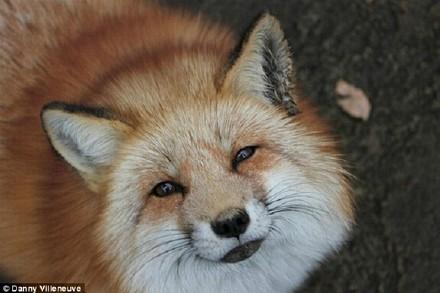 [异次元观光]施主,你去过萌萌哒狐狸村吗?
