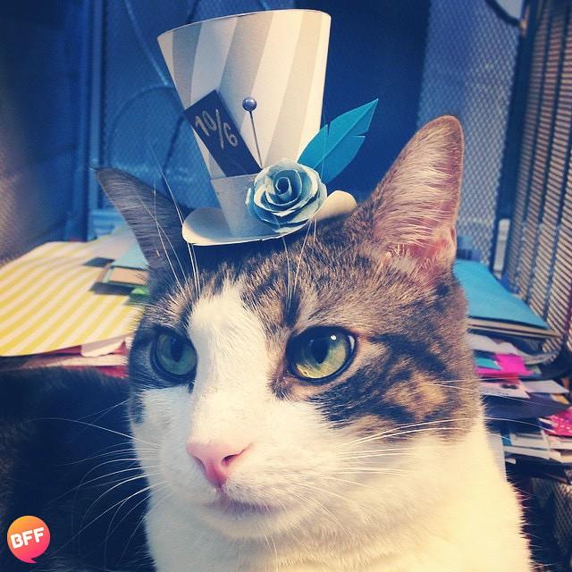 的萌猫 戴帽子的猫
