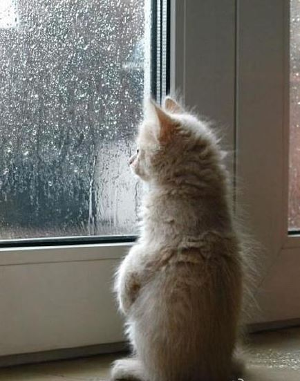 你们有没有阴天下雨综合症,就是每到阴天下雨时候就会丧失一切工作