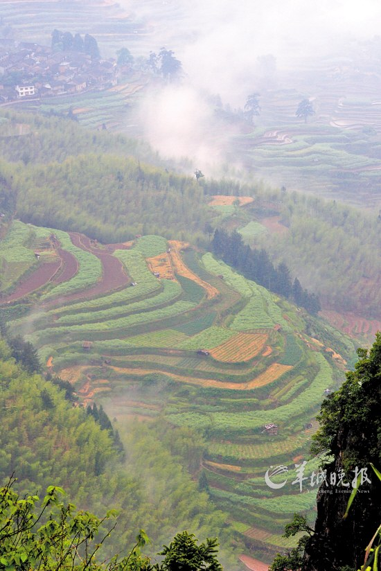 竖屏贵州梯田风景图片