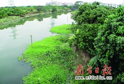 琶洲塔公园湖水污染治理