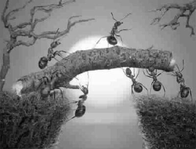 """蚂蚁""""鸽子""""山东孙露成绩大片图片"""