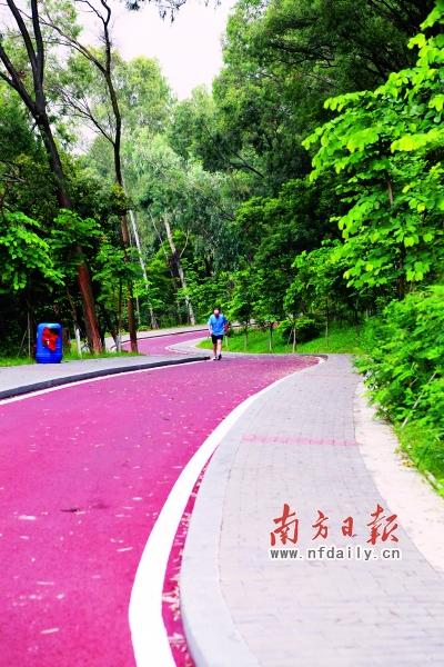 绿道网目前已经完成2372公里省立绿道和2828公里城市绿道的全线贯通