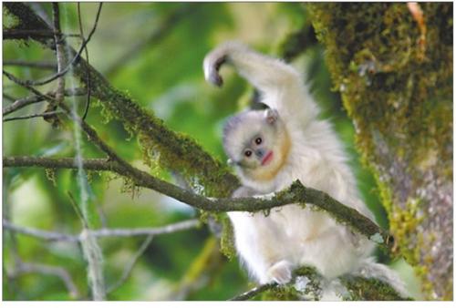 顽皮可爱的小猴不怕人