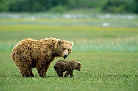 大棕熊飞机电路图