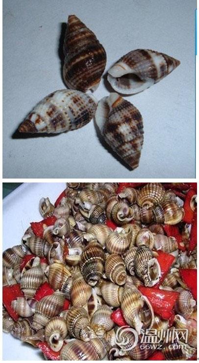 香螺的部位不能吃图解