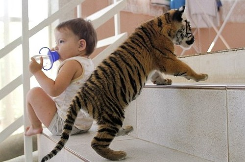 豹 豹子 壁纸 动物 桌面 500_332