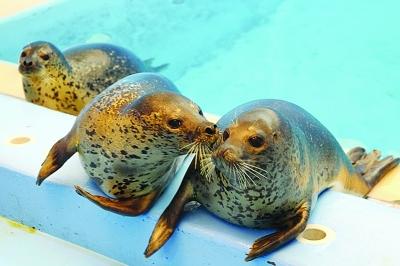 香港海洋世界看南北极动物