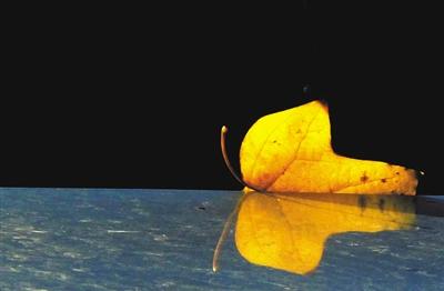 视频  金·蝶 9月26日,中关村,一片落叶与倒影合在一起像一只蝴蝶.