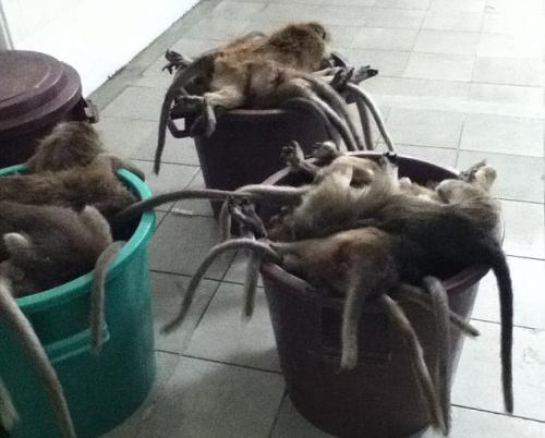 遭屠杀的猴子被丢弃在实验室的垃圾桶里。