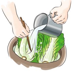 卡通炖白菜手绘