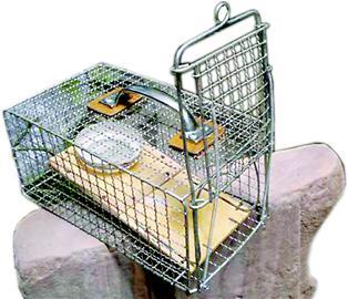 而是在笼中安装了一个踏板,并通过挂钩挂住笼门,老鼠只要进笼踩上踏板
