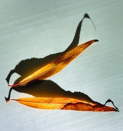 蝴蝶书签折纸步骤图解