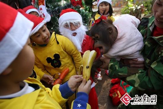 圣诞讲座 动物和小朋友们一起过节(图)