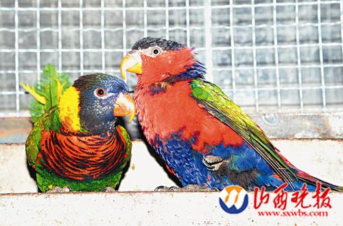 18只鹦鹉远道而来入住太原动物园(图)
