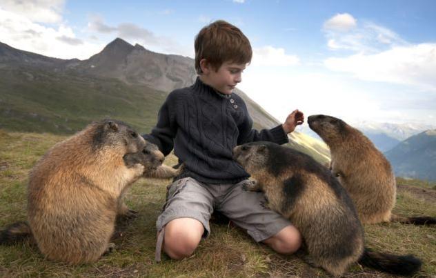 与小男孩建立亲密友谊的可爱土拨鼠 可爱鼠与小男孩成亲密玩伴 野生的土拨鼠本是一种害羞而敏感的动物,但在欧洲阿尔卑斯山上,有一群土拨鼠却和一个来自奥地利的8岁小男孩马特奥建立起非同寻常的深厚友谊。 当4年前和家人第一次去阿尔卑斯山度假时,马特奥就和那里的一群土拨鼠成了好朋友。这些毛绒绒的小东西一看到马特奥,就十分信赖地围过来,在他身边大胆地进食和玩耍。 此后,马特奥一家每年都会到阿尔卑斯山上逗留两周,看望这些可爱的小家伙。马特奥的父亲介绍道,这些土拨鼠与儿子的友谊已经超过4年了,马特奥十分喜欢这些土拨鼠,