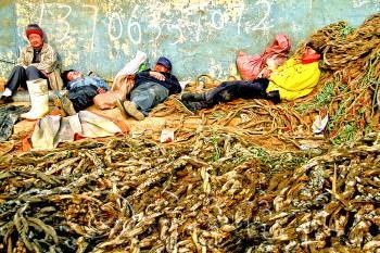 渔船丰收手绘图