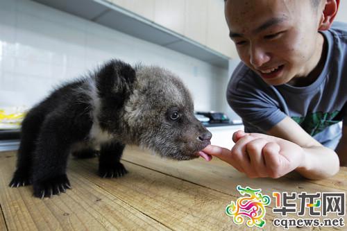 """动物园真热闹 小宝宝集体卖萌 猩猩爱撒娇棕熊贪吃 看这一只只可爱的"""""""