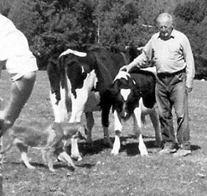 柯立夫与他的牲口,约摄于1983年。