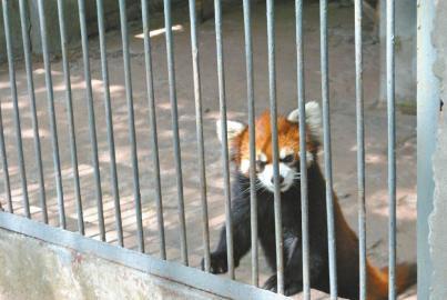 一个人的坚守 私营南充动物园何去何从?