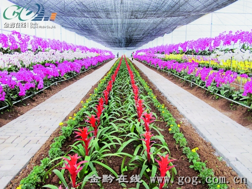 进农业产业结构调整
