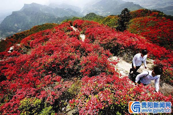丹寨龙泉山地图