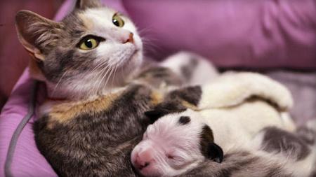 """狗宝宝出生一天遭遗弃 好心猫咪当""""奶妈""""(图)"""