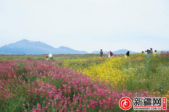 18日,在乌鲁木齐县南旅基地翠鸟花谷,游客正在花丛中拍照休闲.