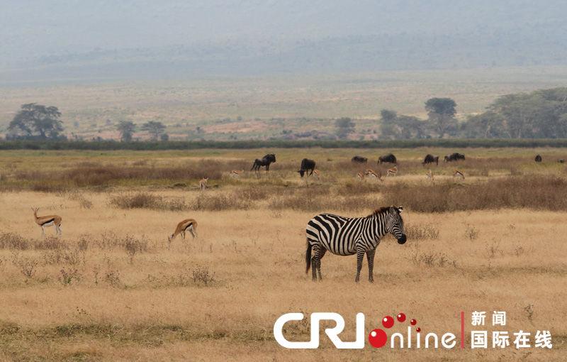壮美的动物世界 坦桑尼亚恩戈罗恩戈罗火山口(高清组图)