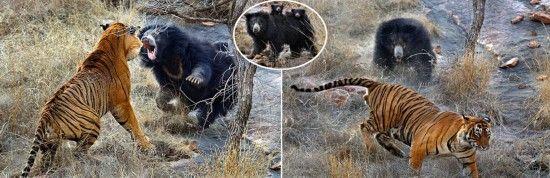 在印度拉贾斯坦邦野生动物保护区参观的