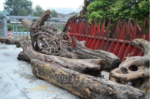 拦截下来的木头