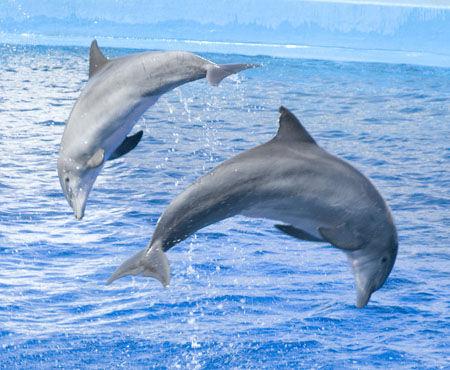用珠子穿的海豚详细步骤和图解
