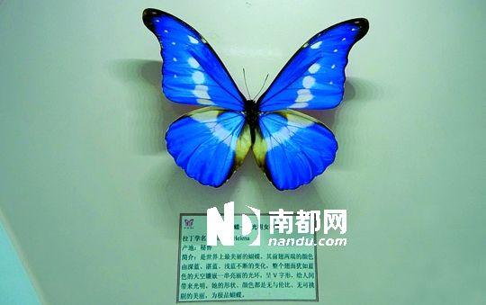 蝴蝶雕刻步骤图解