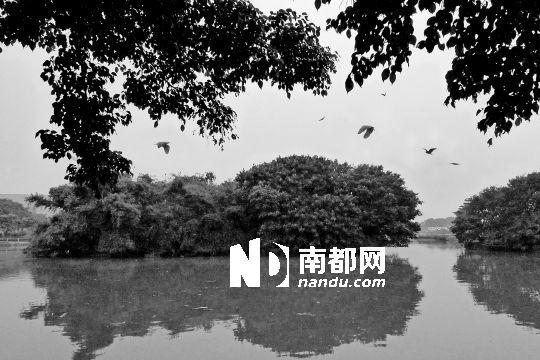 长洲岛中山公园小鸟天堂.