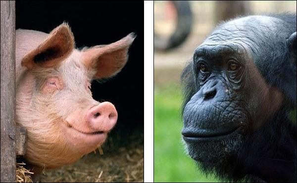 动物鼻子结构解剖