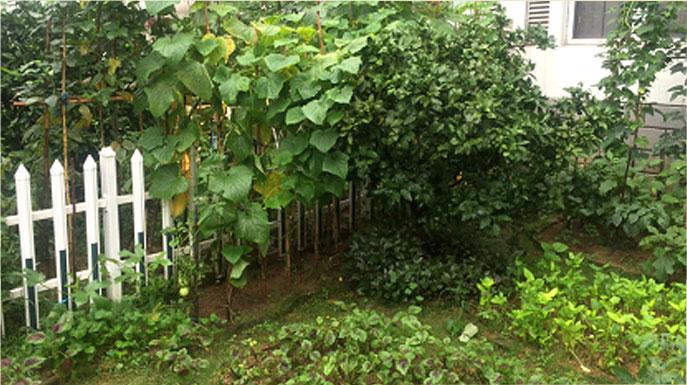 位于宁波市海曙区的天一家园,有居民将楼下花坛圈起来搞起了