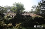 时间一久,岛上的这些老宅年久失修、破旧不堪,都被藤蔓和植被淹没,披上了一件绿色的外衣。