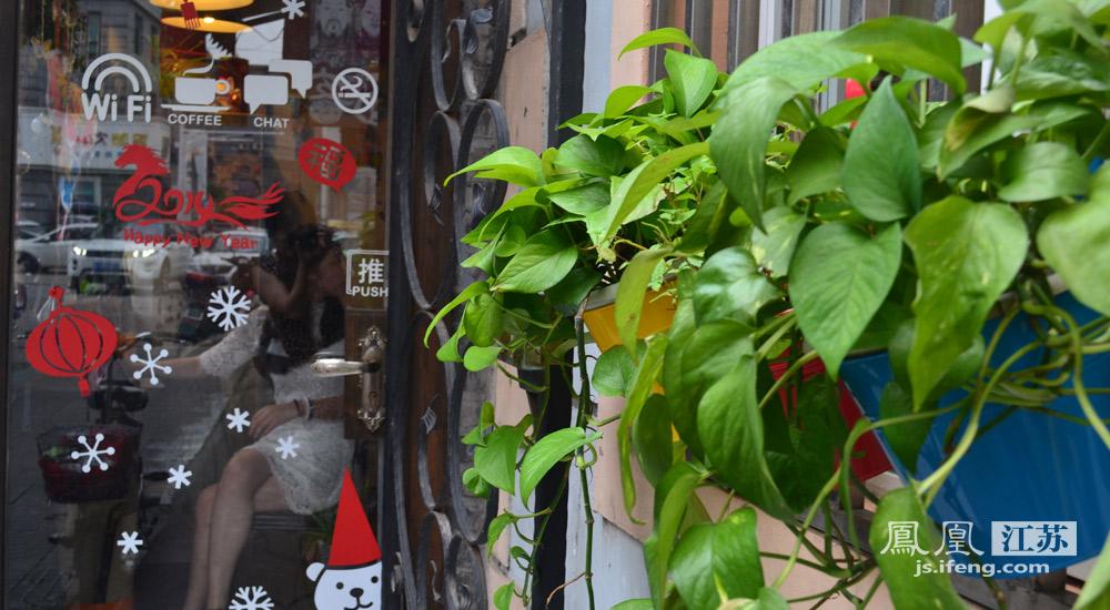 下午茶之面客窗沿挂着的两盆绿植  与七月咖啡馆相映成趣