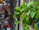 面客窗沿挂着的两盆绿植  与七月咖啡馆相映成趣